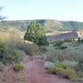 Descent to the switchbacks. Often deer mingle here.- Hall Ranch: Nighthawk Trail