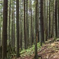 Beautiful singletrack on Fromme Mountain.- Mount Fromme Trails: 7th Secret, Crinkum/Crankum + Kirkford