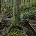 Woodwork everywhere on Crinkum/Crankum.- Mount Fromme Trails: 7th Secret, Crinkum/Crankum + Kirkford