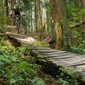 Plenty of wood throughout the trail.- Mount Fromme Trails: Ladies Only + Lower Ladies