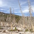 Swaths of dead trees are a visual reminder that carbon dioxide seeps from the ground near Mammoth Mountain, a relatively young volcano.- McLeod Lake Trail