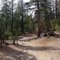 McLeod Lake Trail.- McLeod Lake Trail