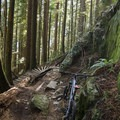 Lower Ladies covers some crazy terrain.- Mount Fromme Trails: Ladies Only + Lower Ladies