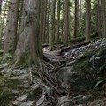 Technical lines that have no room for error. Much steeper than it looks here.- Mount Fromme Trails: Ladies Only + Lower Ladies