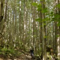 Oilcan opens up at the end.- Mount Fromme Mountain Bike Trails: Upper Oilcan, Oilcan + Digger