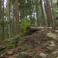 Your brakes will be burning by the time you reach the bottom.- Mount Fromme Mountain Bike Trails: Upper Oilcan, Oilcan + Digger