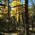 Fall colors in Rocky Mountain National Park.- Chasm Lake Hike
