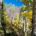 Arborglyphs in the aspen along the Son of Mill Trail.- Son of Mill Creek Trail Mountain Bike Loop