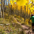 The forest glows with golden hues.- Son of Mill Creek Trail Mountain Bike Loop