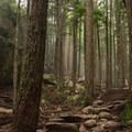 The trail climbs through lush forest.- Stawamus Chief Summit Trail Hike