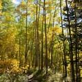 The trail crosses an aspen grove along the way.- Ice Lake + Island Lake Hike