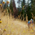 Meadows and pine along the Wasatch Crest Trail.- Wasatch Crest Mountain Bike Trail