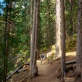 Deep forest on the Great Western Trail.- Wasatch Crest Mountain Bike Trail