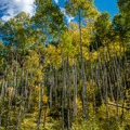 The aspens were just beginning to turn color in mid-September.- West Brush Creek Trail Hike