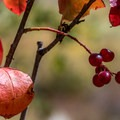 Signs of fall are all around.- Hunter Creek Trail