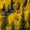 Peak aspen color.- Crater Lake + Maroon Lake Hike via the Maroon-Snowmass Trail