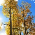 Golden aspens along the Marvine Lake Trail.- Marvine Lake Trail