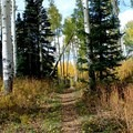 Singletrack section of trail.- Marvine Lake Trail