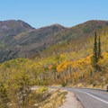 Many large, healthy aspen groves grow in Big Cottonwood.- Scenic Highway 190 to Guardsman's Pass