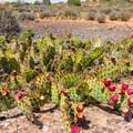 One major hazard of desert mountain biking.- Sand Flats Recreation Area
