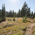Hiking south along the Pacific Crest Trail en route to Chambers Lakes.- Chambers Lakes Hike via Obsidian Trailhead
