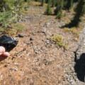 Obsidian along the trail.- Eileen Lake + The Husband Lake Hike
