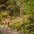 This trail is dog friendly! - Ancient Cedars Trail Hike