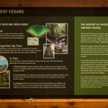 Some interesting information about the Ancient Cedars.- Ancient Cedars Trail Hike