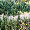 Along Maroon Creek Road- Maroon Creek Road Campgrounds