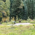 Silver Bar is just 4 walk-in tent sites- Maroon Creek Road Campgrounds