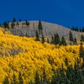 Aspens making the transition to winter.- Ashcroft and Castle Creek Road