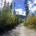 The road leading to the walk-in tent campsites. - Gore Creek Campground