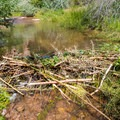 Beaver dam on North Fork Mill Creek.- Fins N Things Canyoneering