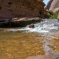 Refreshing water in Negro Bill Canyon.- Ephedra's Grotto / Medieval Chamber Canyoneering