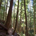 Trail to Linton Lake through the old-growth forest.- Linton Lake Hike