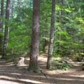 Campsite in Alder Springs Campground.- Alder Springs Campground