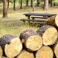 Free firewood is provided.- Buffalo Campground