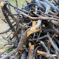 A nice pile of free kindling for anyone who wants it.- Buffalo Campground
