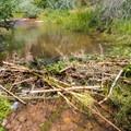 Beaver dam on North Fork Mill Creek.- Mill Creek Swimming Holes