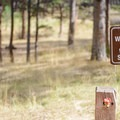 Potable water is available at Buffalo Campground.- Buffalo Campground
