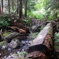 The trail immediately crosses a creek and heads into the forest.- Middle Pyramid Hike