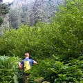 Views of the basin are guarded by thick brush.- Middle Pyramid Hike