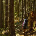 The West Canyon Trail climbs gently for a few kilometers.- Golden Ears Summit Hike