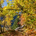 Fall colors along the West Canyon Trail.- Golden Ears Summit Hike