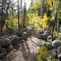 Ascending up through aspen. - Turquoise Lake Trail Mountain Bike Ride