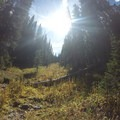 Steeply wind through pines on the way to the summit of Red Buffalo Pass.- East Vail to Frisco Thru Hike via Eccles Pass