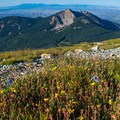 South Mountain from the saddle. Flowers up here have only a very short summer in which to bloom.- Mount Peale Summit Hike