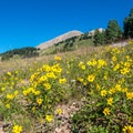 Wildflowers and Mount Tuk in the large meadow.- Mount Peale Summit Hike