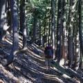 Starting off through a thick forest of mountain hemlock (Tsuga mertensiana). - Eileen Lake + The Husband Lake Hike