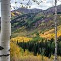 Aspen along Maroon Creek.- Maroon Bells Sunrise